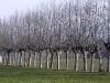inverno-alberi