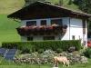 mucca-pannelli-casa
