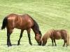cavallo-e-poni Ph Christian Penocchio
