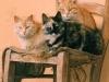 gatti-Ph Christian Penocchio