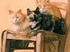 Animali cani e gatti