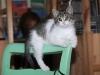 gatto-matilda