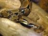 Serpente boa Ph Christian Penocchio