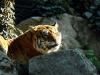 Tigre2 Ph Christian Penocchio