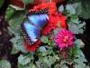 43-farfalle