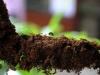 90-formiche