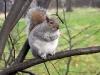 scoiattolo01