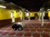 Islam moschea preghiera Ph Christian Penocchio