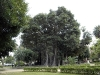 palermo-giardino-garibaldi02