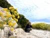 segesta-fiori-natura23